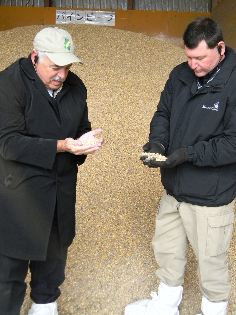 checking corn