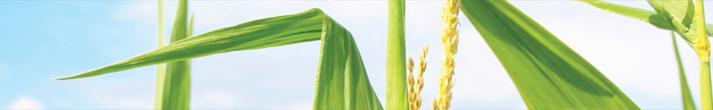 Missouri Corn Growers header image